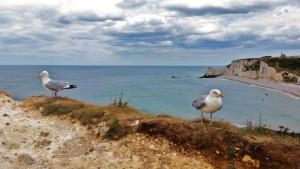 Planerium-Seagulls-on-a-Cloudy-Day-300x169
