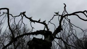 planerium-old-tree