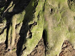 planerium-tree-9