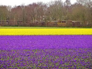 planerium-flowers-field-1