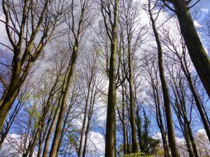 planerium-trees-10