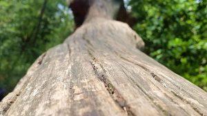 planerium-trees-12