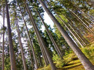 planerium-trees-2