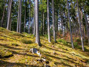 planerium-trees-3