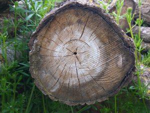 planerium-trees-5