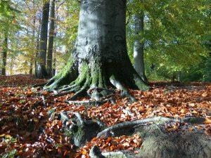 planerium-trees-6
