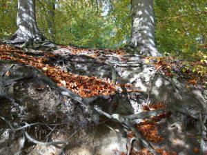 planerium-trees-7