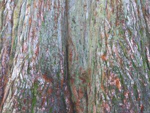 planerium-trees-8