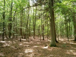 planerium-trees-9
