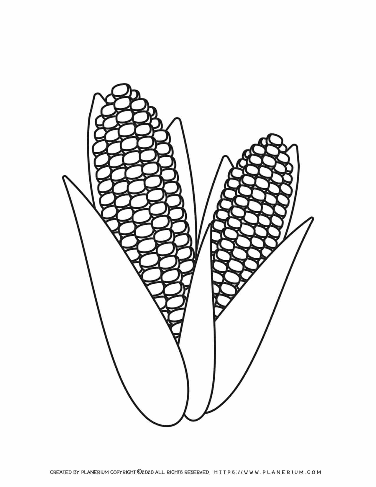 Corn - Coloring Page | Planerium
