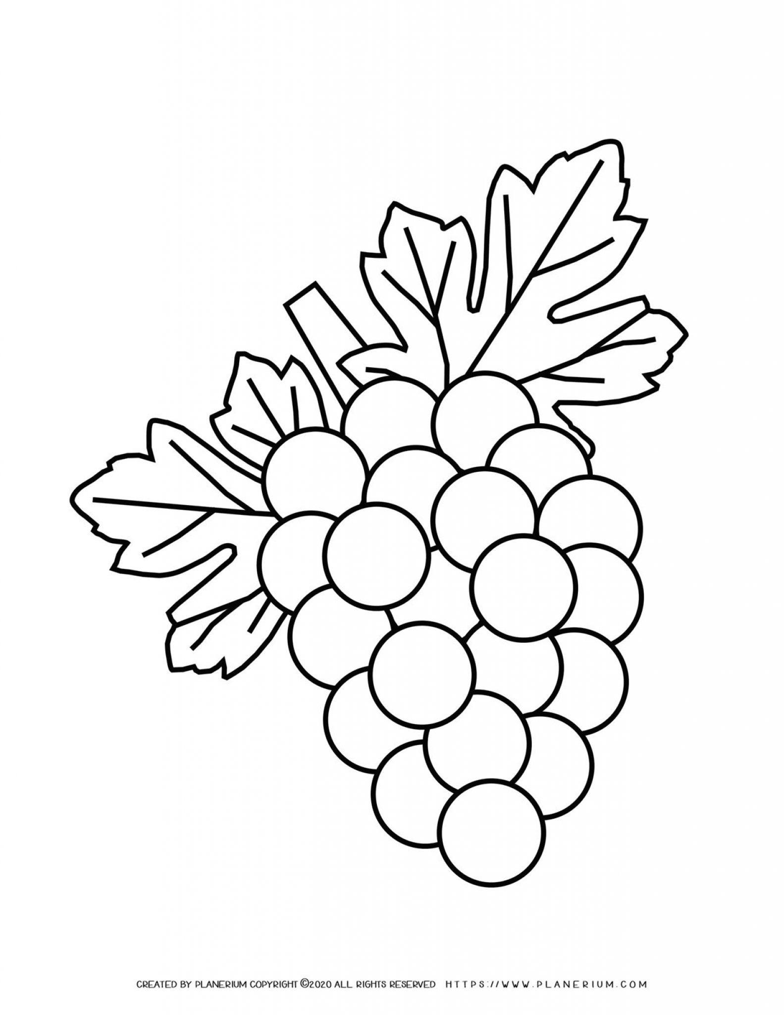 Grapes - Coloring page | Planerium