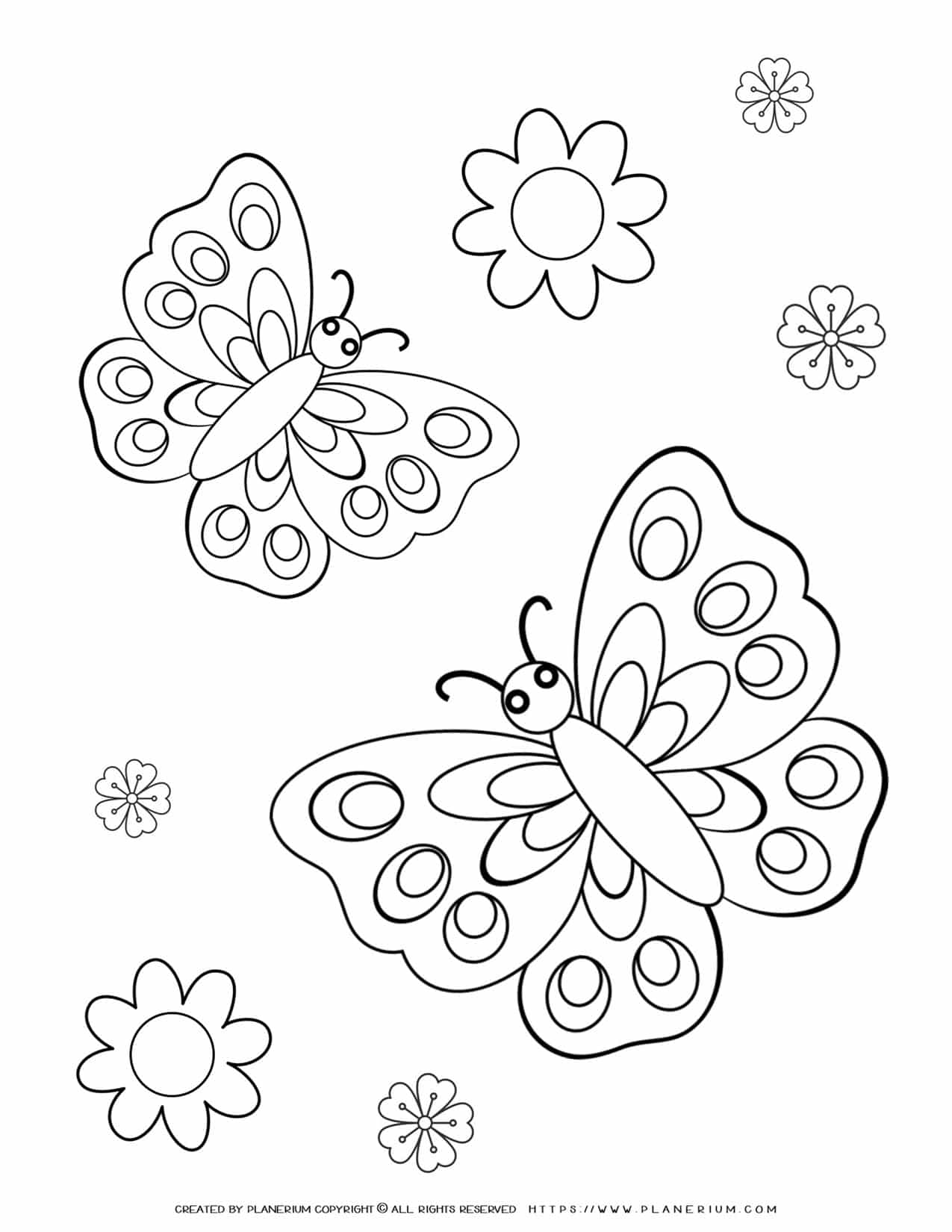 Two Butterflies And Flowers | Planerium