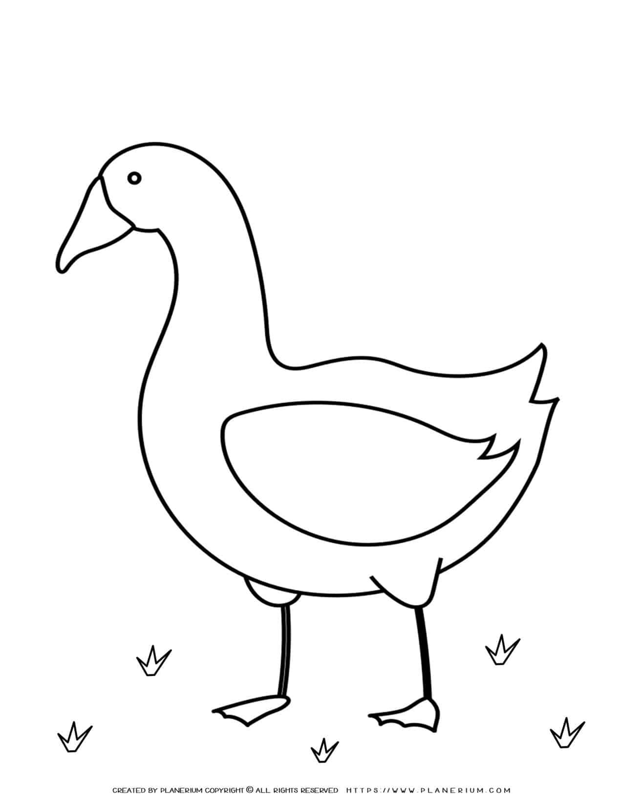 Animals Coloring Page - Goose   Planerium