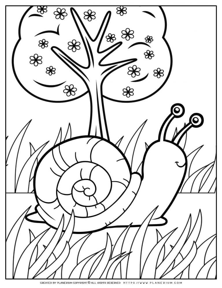 Animals Coloring Page - Snail | Planerium