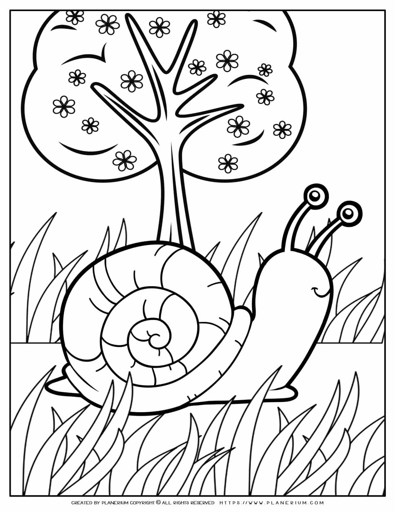 Animals Coloring Page - Snail   Planerium