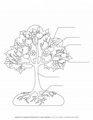 Apple Tree - Custom Worksheet | Planerium
