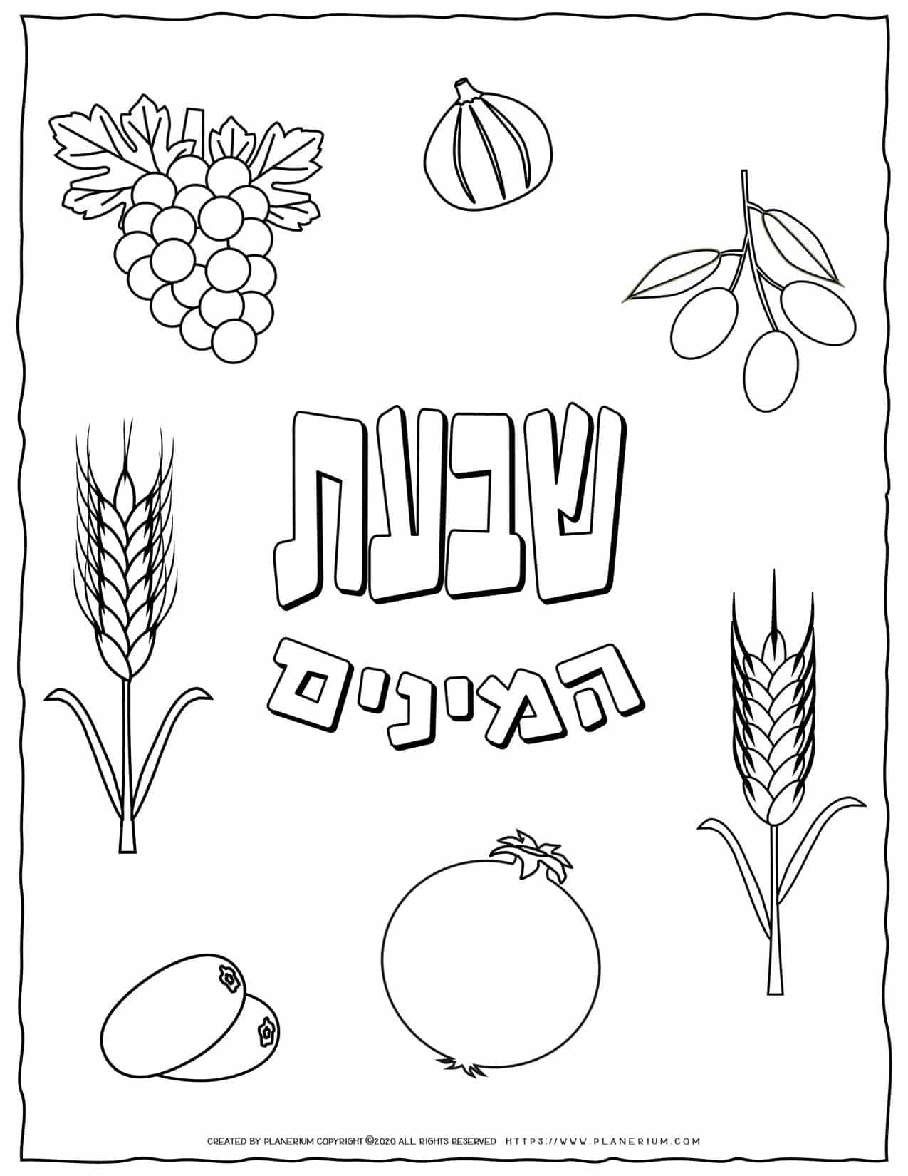 Shavuot Coloring Page - The Seven Species in Hebrew | Planerium