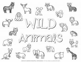 Wild Animals Images | Planerium