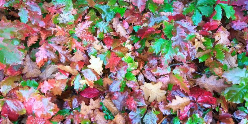Fall Season post  Copy